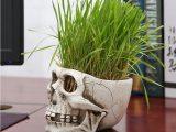 Desk Skull Resin Flower Pot